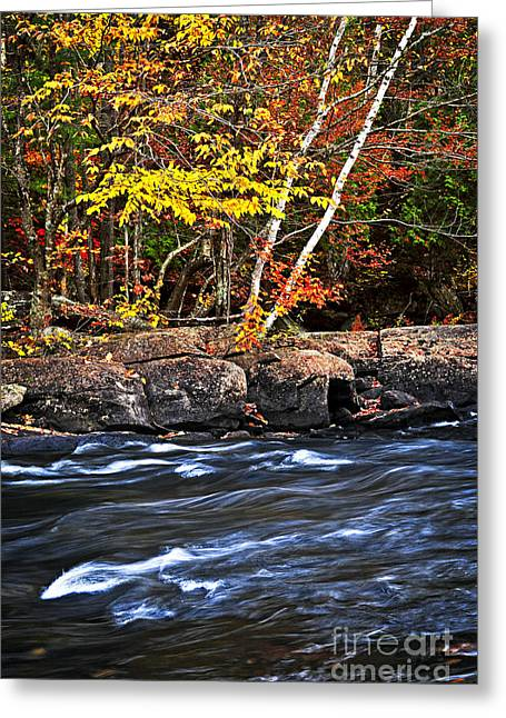 Flowing Greeting Cards - Fall forest and river landscape Greeting Card by Elena Elisseeva