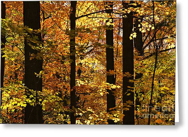 Sunlit Greeting Cards - Fall forest Greeting Card by Elena Elisseeva