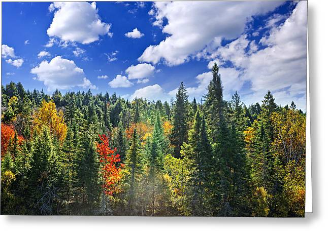 Autumn Landscape Photographs Greeting Cards - Fall forest in sunshine Greeting Card by Elena Elisseeva