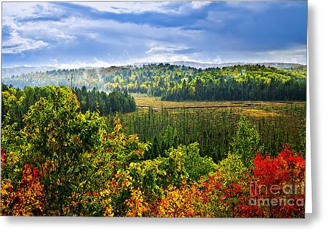 Autumn Greeting Cards - Fall forest rain storm Greeting Card by Elena Elisseeva
