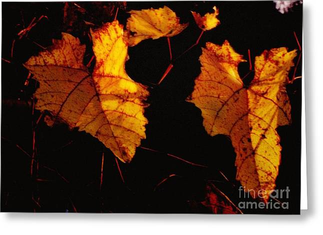 Photos With Red Digital Greeting Cards - Fall Grapevine at nite Greeting Card by Marsha Heiken