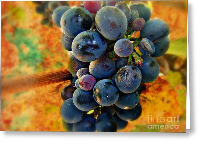 FALL HARVEST Greeting Card by Kevin Moore