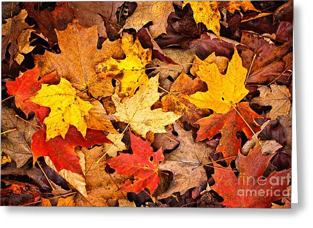 Bright Leaves Greeting Cards - Fall leaves background Greeting Card by Elena Elisseeva