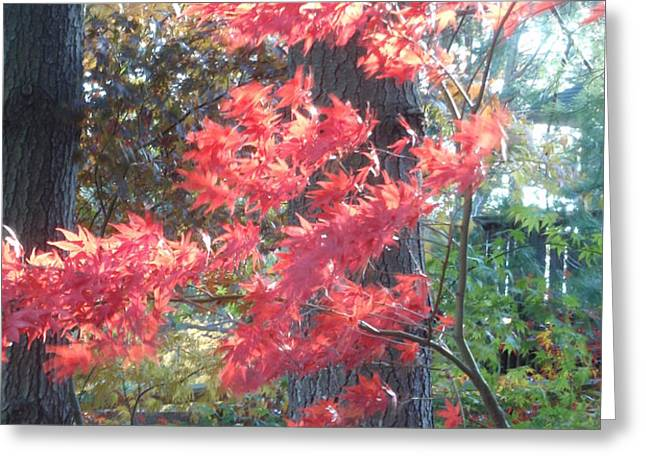 FALL SPLENDOR Greeting Card by VALIA BRADSHAW