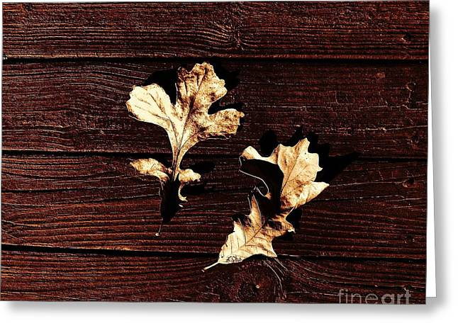 Fall Photos Digital Art Greeting Cards - Fallen Beauty Greeting Card by Marsha Heiken