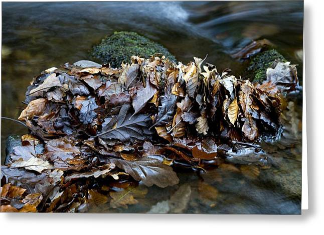 Water Flowing Greeting Cards - Fallen Leaves In A River Greeting Card by Dr Keith Wheeler