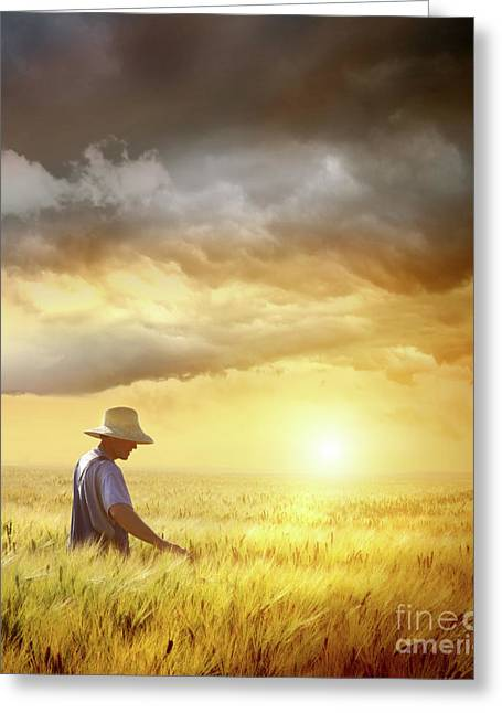 Ground Greeting Cards - Farmer checking his crop of wheat  Greeting Card by Sandra Cunningham