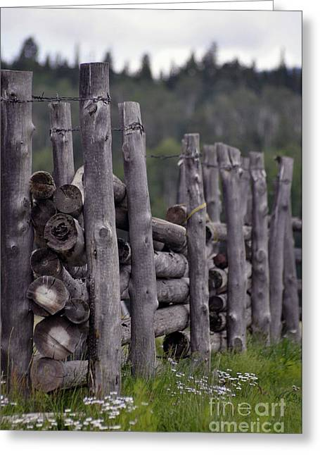 Fenced In  Greeting Card by Juls Adams