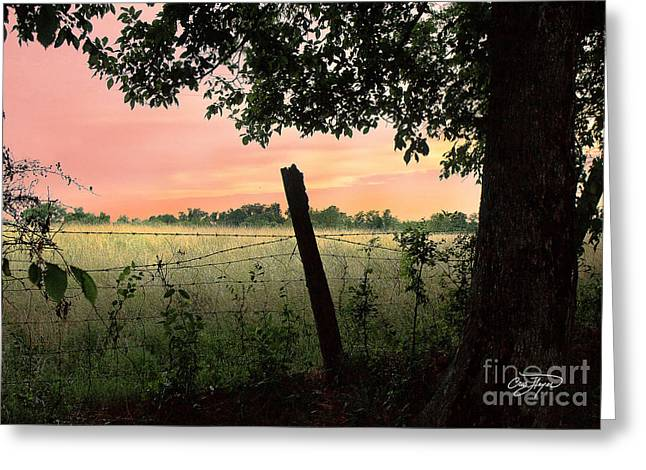 Cris Hayes Greeting Cards - Field of Dreams Greeting Card by Cris Hayes