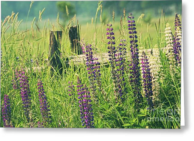 Pasture Herb Greeting Cards - Field of lupin flowers  Greeting Card by Sandra Cunningham