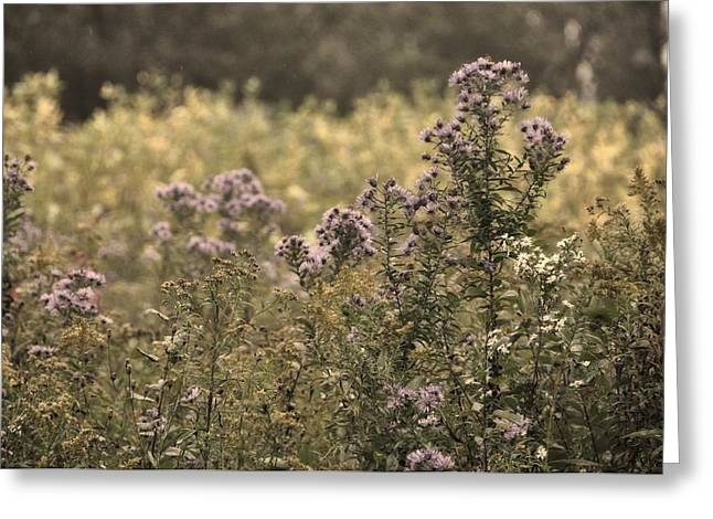 Cazenovia Greeting Cards - Field Of Purple Greeting Card by JAMART Photography