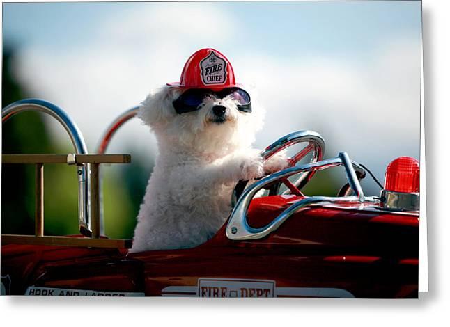 Family Member Greeting Cards - Fifi the Fire Dog Greeting Card by Michael Ledray