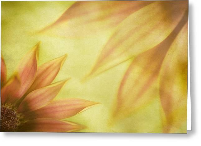 Soft Light Greeting Cards - Floral Montage Greeting Card by Bonnie Bruno