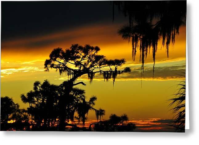 Florida sunset Greeting Card by David Lee Thompson
