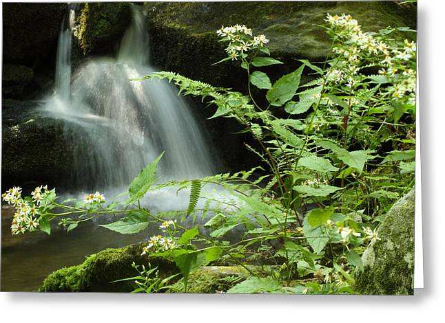 Tennessee River Greeting Cards - Flowers and Falls Greeting Card by Andrew McInnes