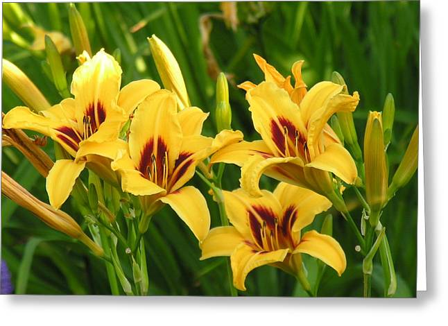 Yello Greeting Cards - Flowers Greeting Card by Diane  Greco-Lesser
