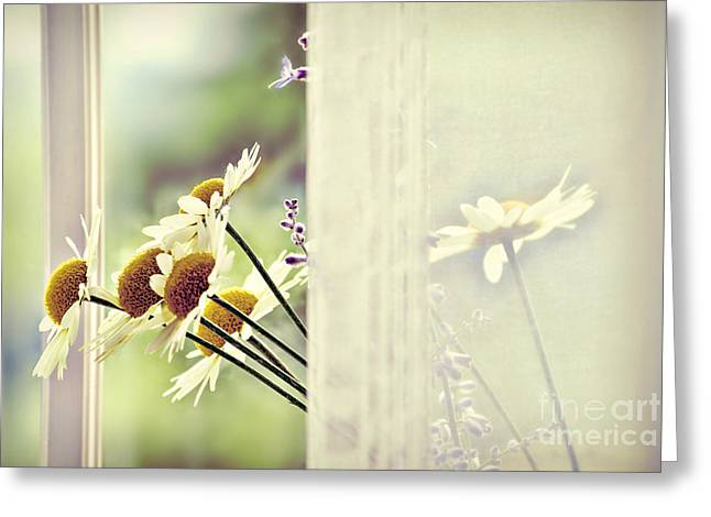 Window Decor Greeting Cards - Flowers Greeting Card by HD Connelly