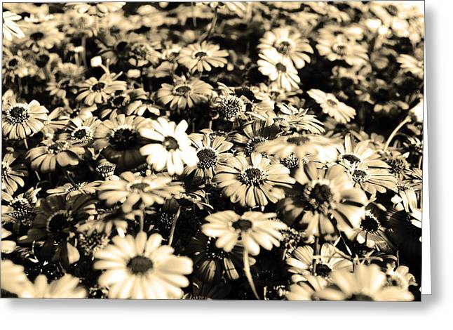 Sophisticated Greeting Cards - Flowers In Sepia Tone Greeting Card by Sumit Mehndiratta