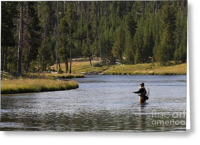 Yellowstone National Park Greeting Cards - Fly Fishing in the Firehole River Yellowstone Greeting Card by Dustin K Ryan