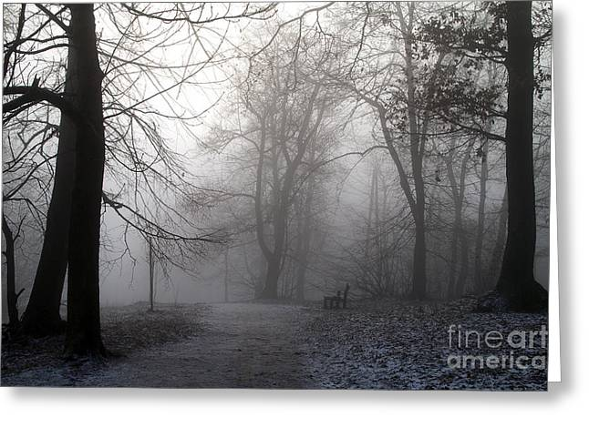 Ski Art Greeting Cards - Fog in forest Greeting Card by Odon Czintos