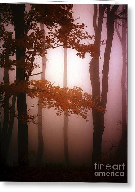 Foggy Misty Trees Greeting Card by Mike Nellums