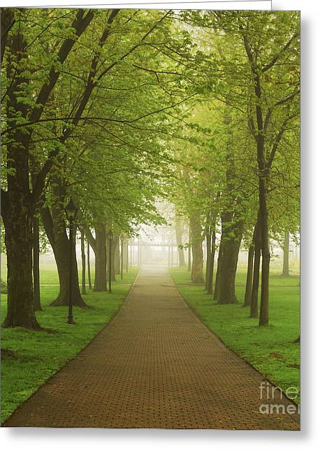 Green Leafs Greeting Cards - Foggy park Greeting Card by Elena Elisseeva