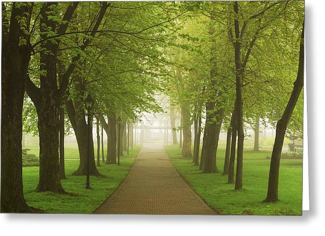 Foggy Park Greeting Card by Elena Elisseeva