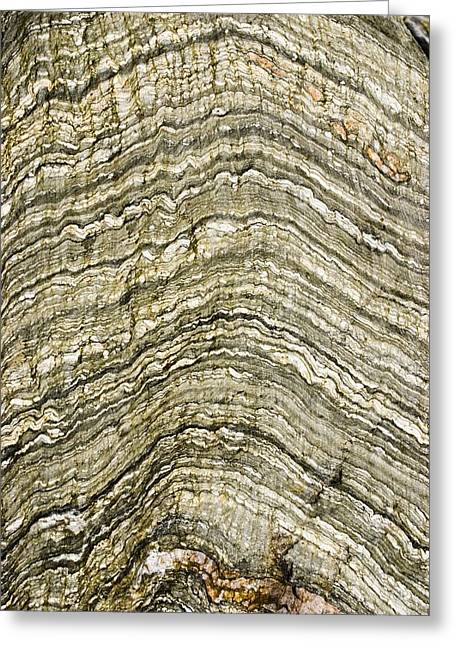 Contortions Greeting Cards - Folded Rock Strata. Greeting Card by Mark Williamson