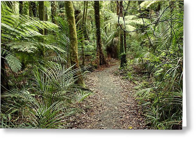 """tropical Trees"" Greeting Cards - Forest trail Greeting Card by Les Cunliffe"