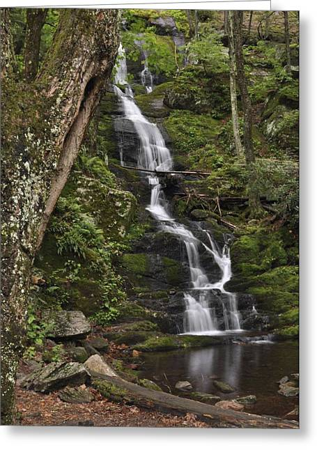 Stokes State Forest Greeting Cards - Forest Waterfall Greeting Card by Stephen  Vecchiotti