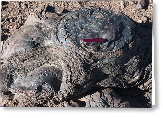 Microbial Greeting Cards - Fossilised Stromatolites Greeting Card by Dirk Wiersma