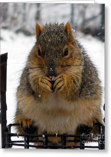 Fox Squirrel Greeting Cards - Fox Squirrel Greeting Card by Patricia Januszkiewicz