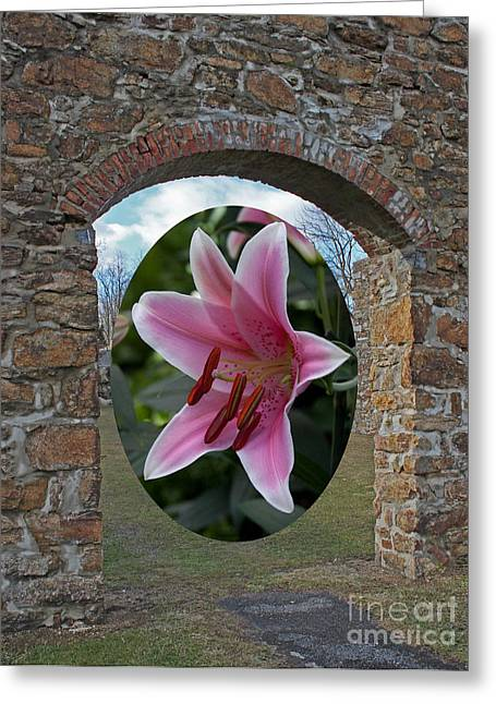Pinks And Purple Petals Digital Art Greeting Cards - Framed in Stone Greeting Card by Robert Sander