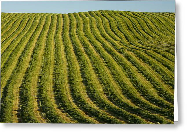 Cut-outs Greeting Cards - Freshly Cut Hay, Irishtown, Prince Greeting Card by John Sylvester