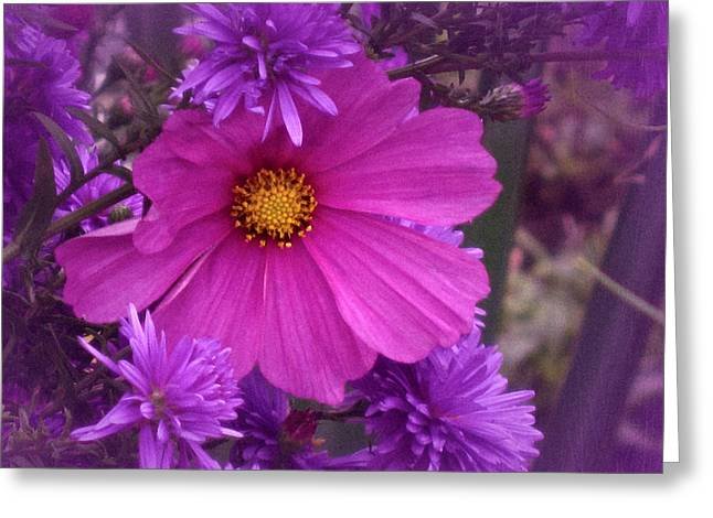 Asters Greeting Cards - Friends will be Friends Greeting Card by Richard Cummings