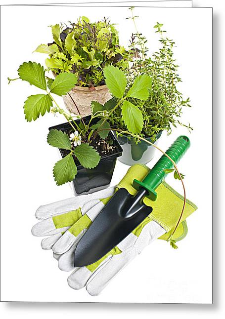 Spade Greeting Cards - Gardening tools and plants Greeting Card by Elena Elisseeva