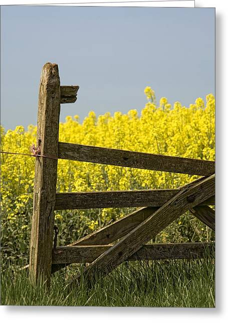 Farm Structure Greeting Cards - Gate Next To A Canola Field, Yorkshire Greeting Card by John Short