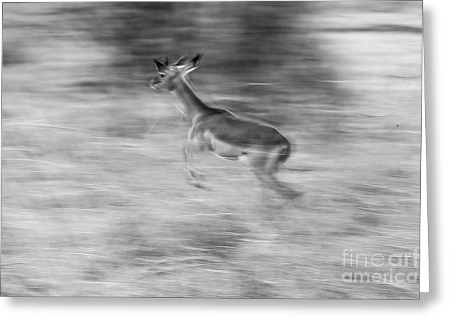 Abstract Movement Greeting Cards - Gazelle Greeting Card by Sabino Parente