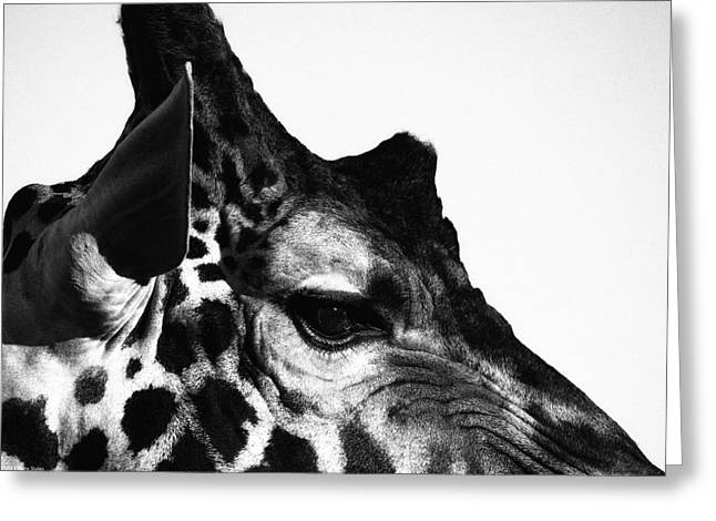 Barry Styles Greeting Cards - Giraffe 7 Greeting Card by Barry Styles