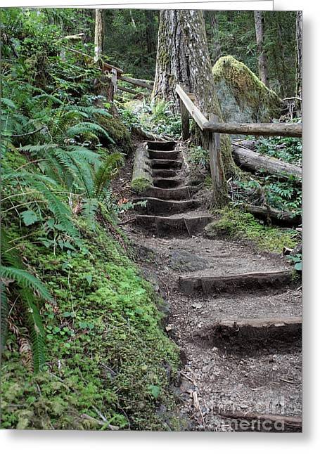 Path In Life Greeting Cards - Going Up Greeting Card by Carol Groenen