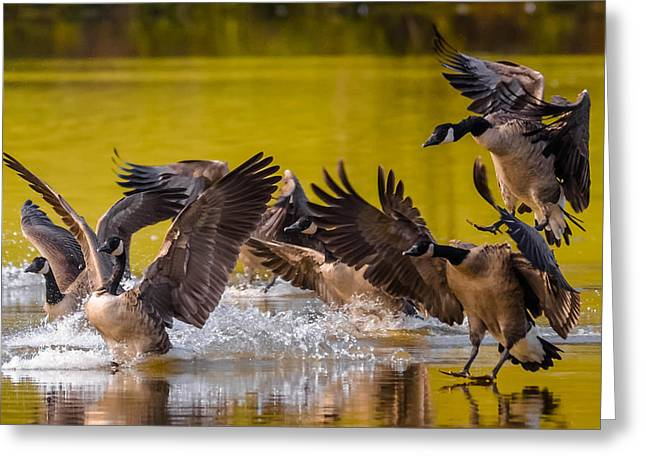 Golden Geese Greeting Card by Brian Stevens
