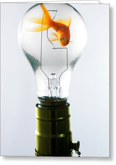 Aquariums Greeting Cards - Goldfish in light bulb  Greeting Card by Garry Gay
