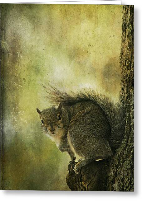 Cindi Ressler Greeting Cards - Gray Squirrel Greeting Card by Cindi Ressler