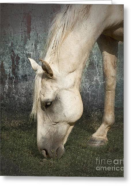 Quarter Horse Digital Art Greeting Cards - Grazing Greeting Card by Betty LaRue