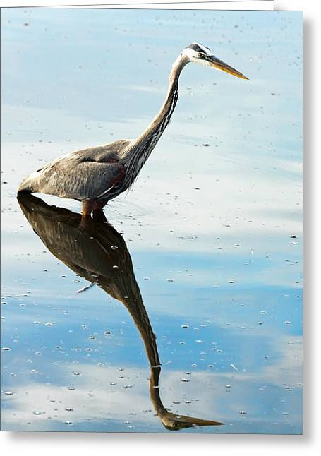 Herodias Greeting Cards - Great Blue Heron Greeting Card by Rudy Umans