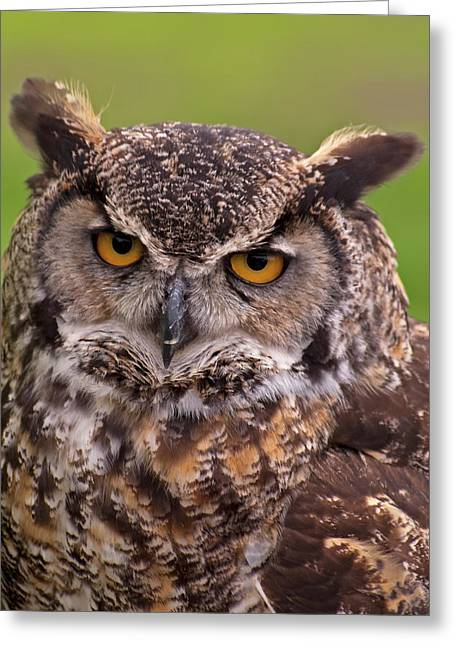 Tufted Ears Greeting Cards - Great Horned Owl Greeting Card by Alexander Rozinov