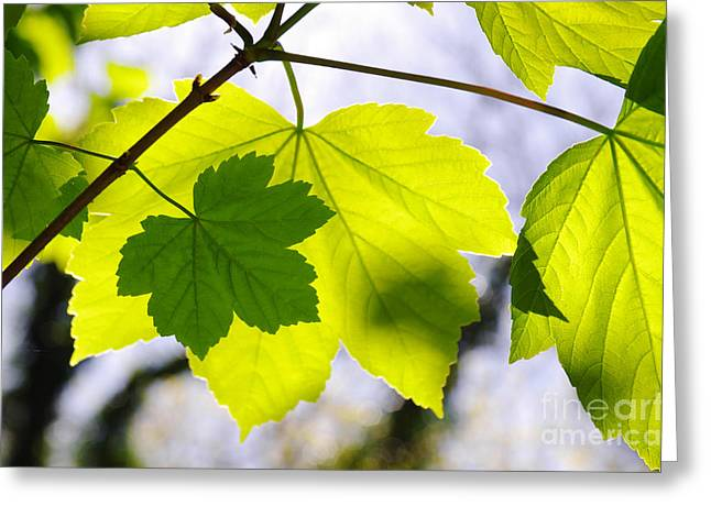 Green Leaves Greeting Card by Carlos Caetano