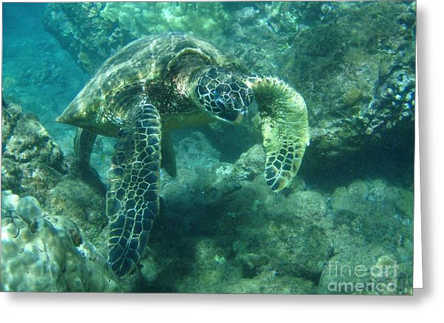 Snorkeling Photos Greeting Cards - Green Sea Turtle Hawaii Greeting Card by Bob Christopher