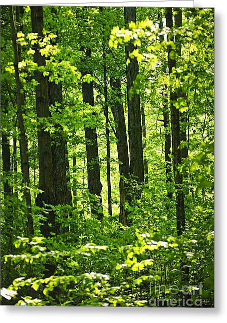 Canadian Greeting Cards - Green spring forest Greeting Card by Elena Elisseeva