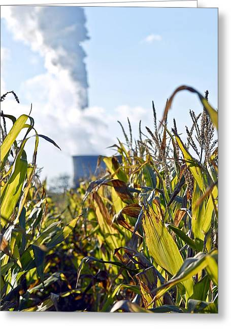 Bioenergy Greeting Cards - Growing Maize For Biofuel Greeting Card by Chris Knapton